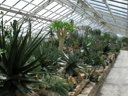 Jahresausflug 2007 Botanischer Garten Muenchen Sukkulentenhaus