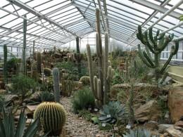Jahresausflug 2007 Botanischer Garten Muenchen Kakteenhaus